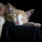 cat-1056662_1920